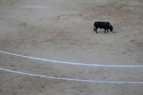 bullfight_9169 web