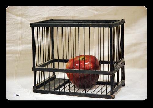 Le prohibieron la manzana, solo entonces la mordio...
