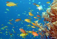 Underwater, Cebu Philippines