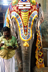 """LIFE IN INDIA SERIES :: """"Hey, Where's my share ?!"""" (GOPAN G. NAIR [ GOPS Creativ ]) Tags: india elephant tourism animals temple photography hinduism soe gopsorg gopangnair"""