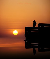 Looking at the sun (aroon_kalandy) Tags: camera light sunset sea sky orange sun india seascape reflection bird beach nature beauty birds silhouette yellow reflections wonderful wonder landscape creativity photography golden photo amazing nice sand perfect waves photographer adobephotoshop