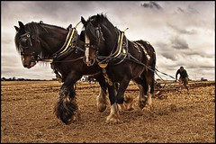 Horse Power (Smudge 9000) Tags: horse kent match ek 2009 ploughing