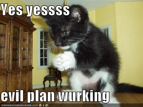 funny-pictures-your-cats-evil-plan-is-working