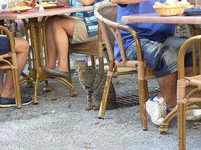 le chat du restaurant.jpg