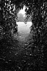 If I could take a look out there (Kaoscube) Tags: autumn trees bw fall nature field leaves foglie alberi nikon bn hidden hide autunno prato bianconero nascosto fronde nascondiglio parcodimonza d700 kaoscube nikkorafs2470mmf28ged