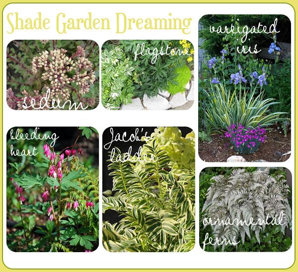 Shade Garden Dreaming