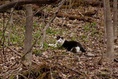 Buddy Amongst the Trout Lilies-5.jpg