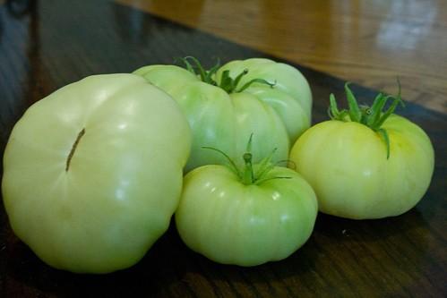fantome du laos tomato