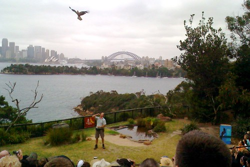Free-flight bird show