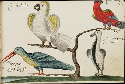 cockatoo, penguin, parrot & long-beaked bird