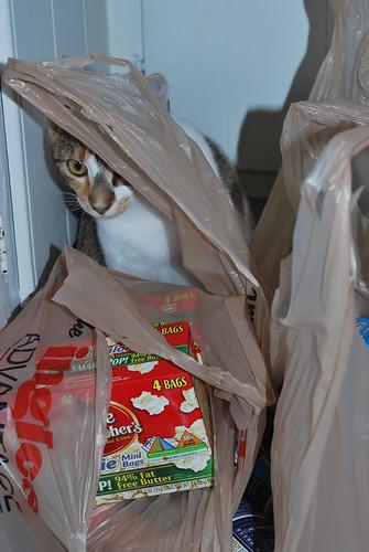 callie groceries 2