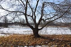 Goodbye, snow! (christiaan_25) Tags: sun tree ice illinois prairie creep menace mortonarboretum creepellagruesome prairiecreep