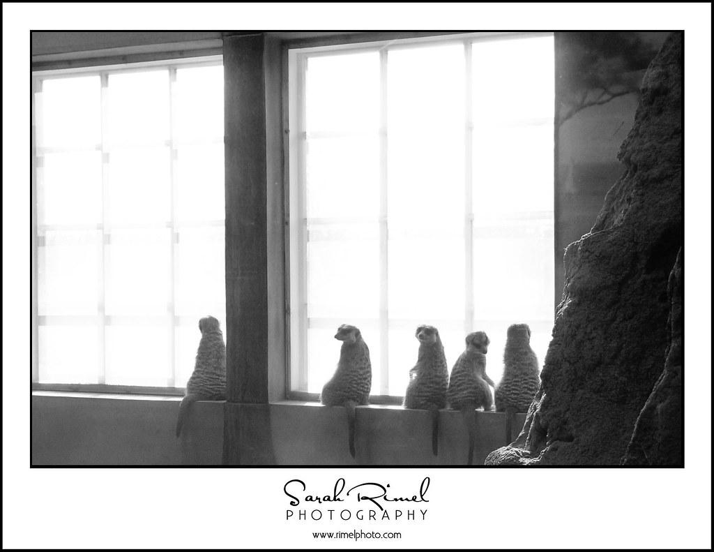 zoo 06