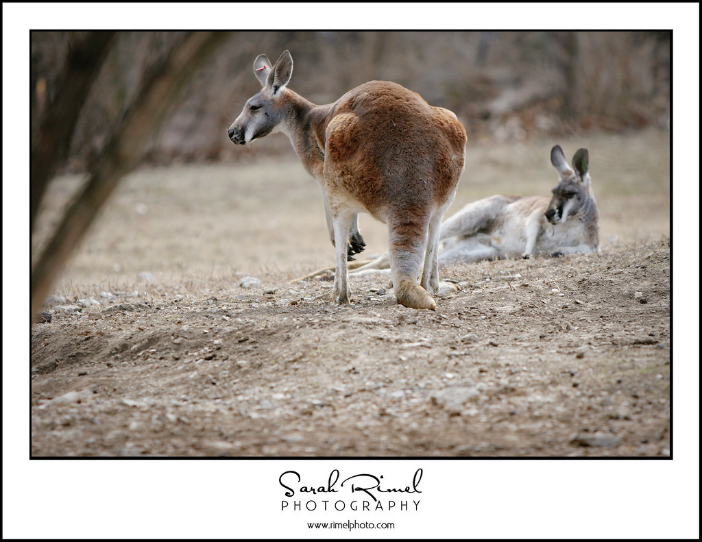 feb zoo 08