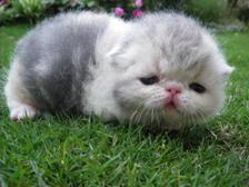 kitten137_0413011208_296568656