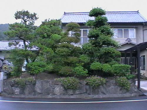 Motomiya-Pokok Bonzai