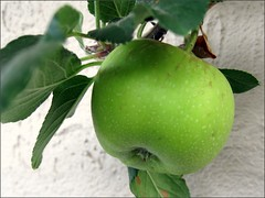 Last Apple
