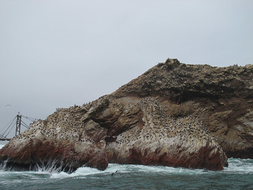 Seabirds on the Islas Ballestas