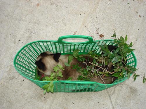 Festooned cat 3