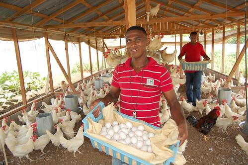 Los huevos de la granja en SFM