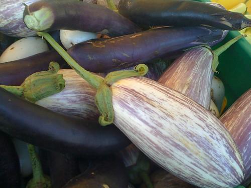Various Eggplant