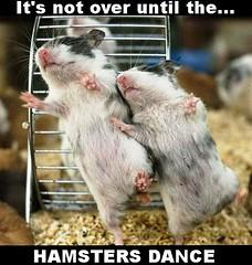 Hampster Dance (TundraFire) Tags: hamsters hamstersdancehamstersdance