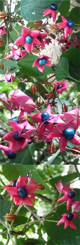 fleursbizarres