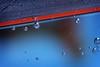 surface (helen sotiriadis) Tags: blue orange fish macro water closeup swim canon aquarium published dof tank bokeh bubbles depthoffield tilt guppy canonef100mmf28macrousm canoneos40d ministract toomanytribbles