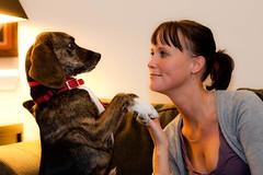 14 (insatiable73) Tags: dog silly cute love smart fun sweet adorable begging sami 365days beaglebassett insatiable73