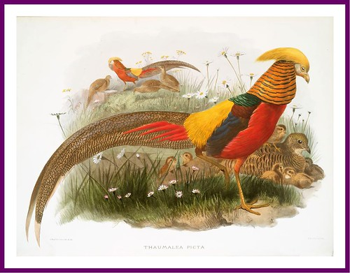 012-A monograph of the Phasianidae- D. J. Elliot 1872