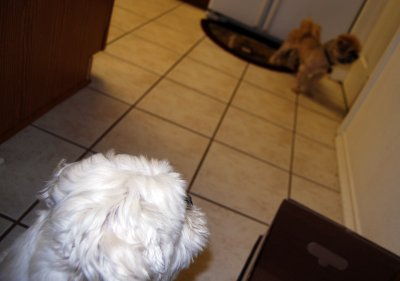 8-I am going to lay down...Mama in NOT home...Daddy is playing with our heads!!!