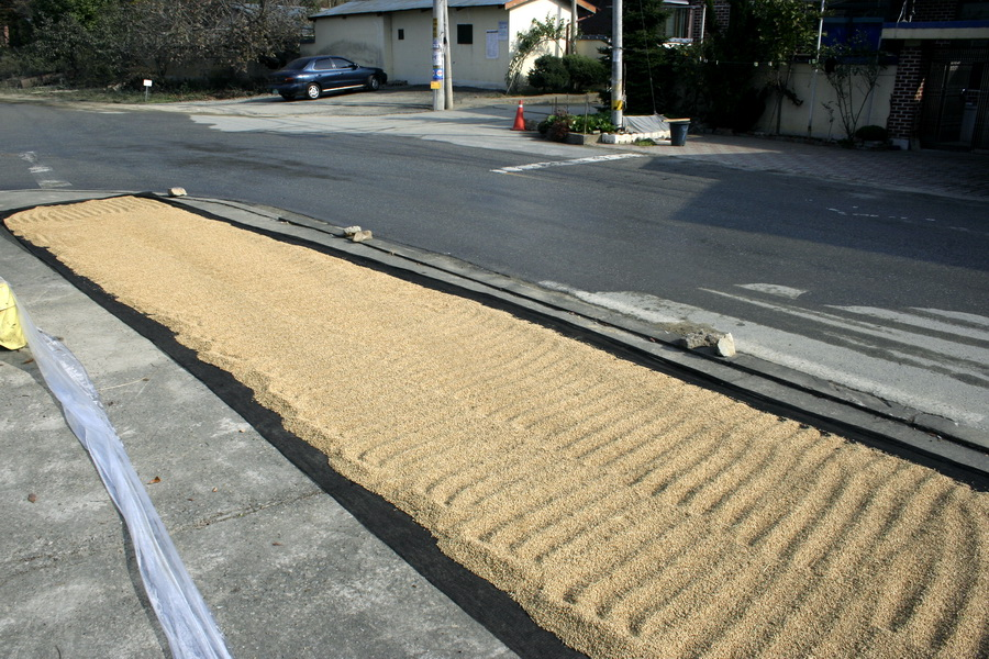 Rice(1)