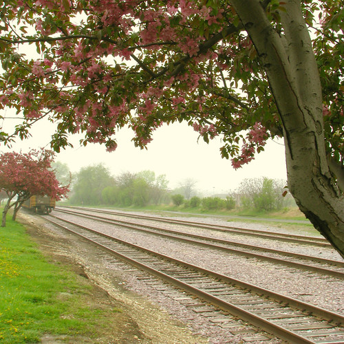 tracks and blossoms {1}