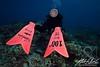100th Dive