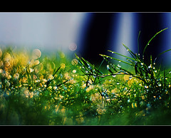 but then it rained.... (PNike (Prashanth Naik)) Tags: light green water grass rain yellow droplets nikon bokeh lawn hyderabad d7000 pnike