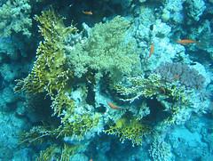 137_3780 (LarsVerket) Tags: egypt snorkling fisk undervannsfoto