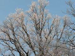 Winter in Voorschoten (Rory Fynde) Tags: winter ice winterinholland icyscenes winterinvoorschoten