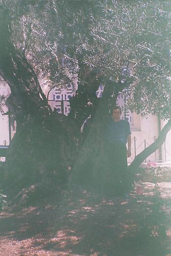 Garden of Getsemany