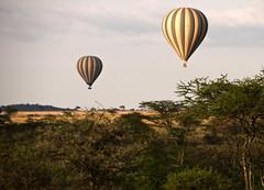 Serengeti Balloon Safari (Marie-Marthe Gagnon) Tags: africa animal landscape tanzania nationalpark scenery wildlife hotair balloon icon safari famine mongolfiere greatnature flickrchallengegroup flickrchallengewinner senengeti mariegagnon mariemarthegagnon