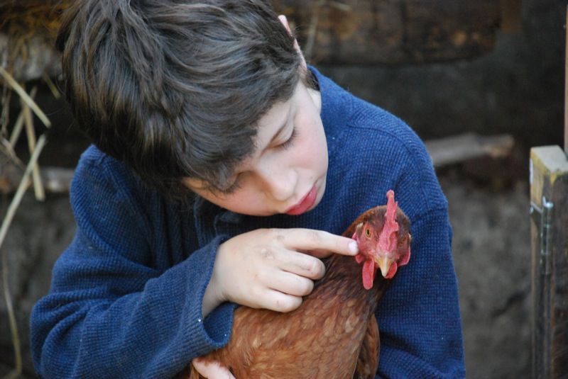 L, playing with chickens