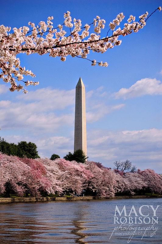 Cherry Blossom Festival - 6