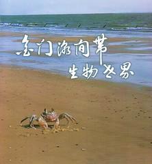 金門潮間帶生物世界