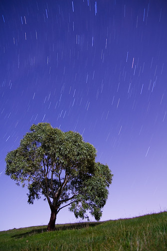 Star Trails with lit tree and landscape from city lights just behind the grass hill