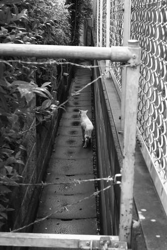 Today's Cat@20090810