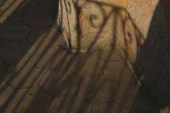 eden 3 (Emilce Somoza) Tags: trees people rboles torre eiffeltower eiffel toureiffel tatoo whitetiger bote rejas races tigreblanco armtatoo