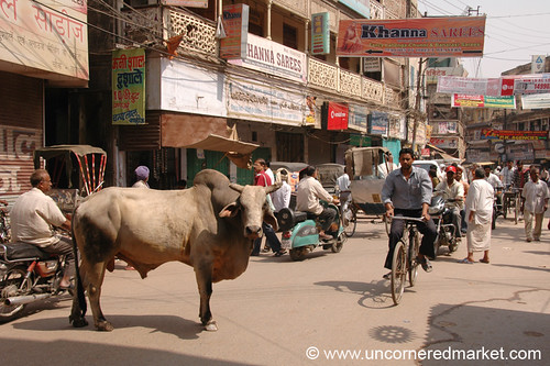 Typical Indian Street Scene