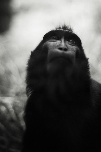 Monkey Portrait / Bart De Keyzer