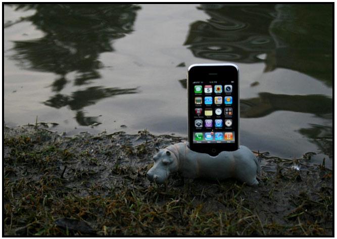 Hippopotadock In Natural Habitat