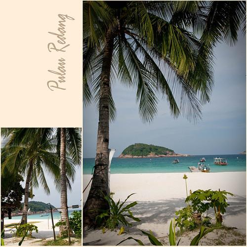 Pulau Redang :: Coconut Trees