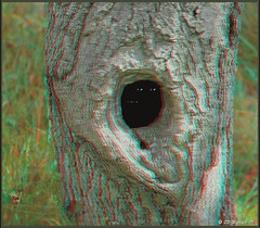Tree Hole (animated) (starg82343) Tags: tree stereoscopic 3d eyes funny hole brian anaglyph spooky stereo bark mysterious wallace critters animated flashing beady peering knott stereoscopy stereographic treehole brianwallace knotthole